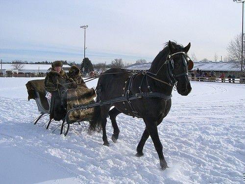 Лошадь в санях