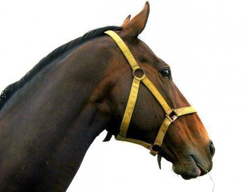 Лошадь и уздечка