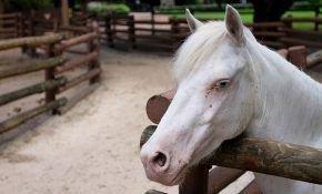 Все, что нужно знать о разведении лошадей