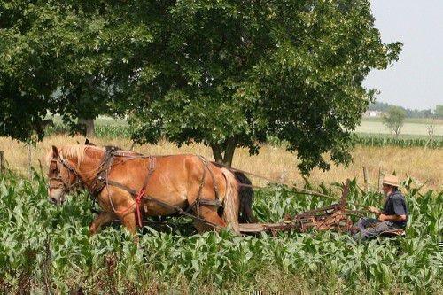 Лошадь пашет поле
