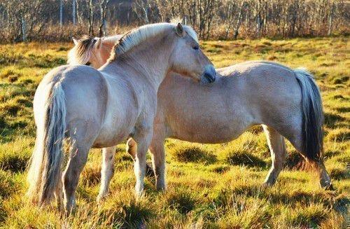 Лошади на пастбище