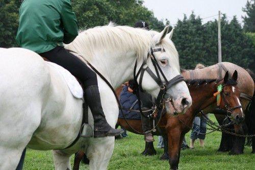 Лошади Перешроны