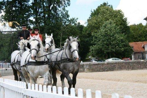 Лошади породы Першерон