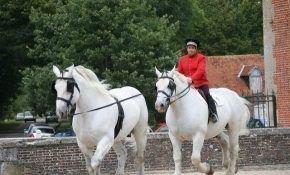 Какая лошадь самая большая в мире?