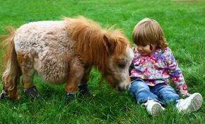 Мини-лошади: разведение и содержание