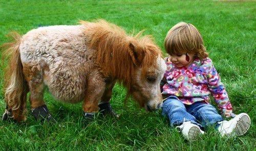 Миниатюрная лошадь и ребенок