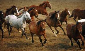 Мустанг - все о лошадях
