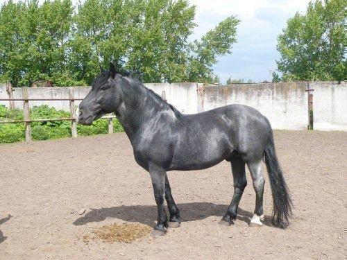 Мышастый конь стоит