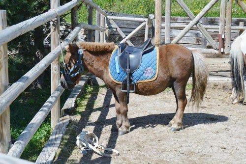 Оседланный пони