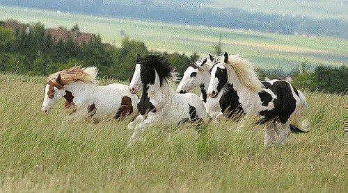 Пегие кони