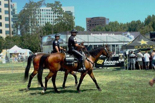 Полицейские кони