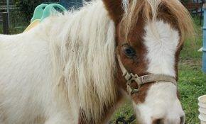 Какие существуют породы лошадей пони?