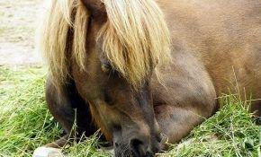Какой сон предпочтителен для лошадей