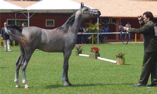 Светло-мышастая лошадь