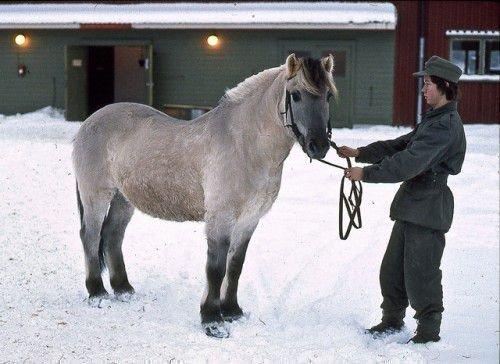 Светло-мышастый конь