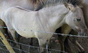 Самые интересные факты о диких лошадях