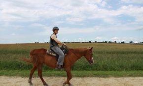 Принципы управления лошадью