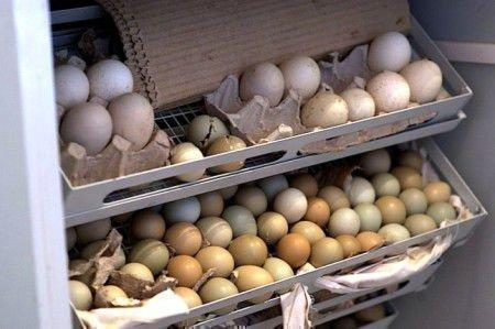 Яйца фазана в ящиках