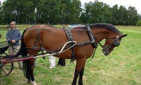 Как правильно запрячь лошадь