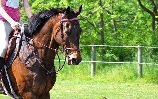 Самая дорогая и популярная лошадь в мире