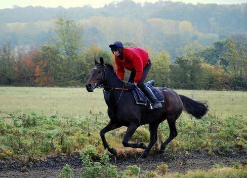 Английский конь бежит
