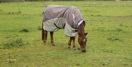 Английский конь на поле