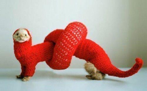Хорек в свитере