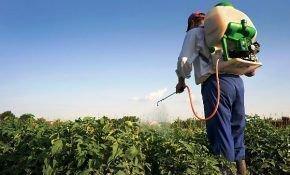 Защита картофеля от сорняков: какой гербицид выбрать