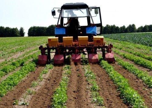 Голландское выращивание картошки