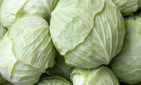 Разновидности сортов белокочанной капусты