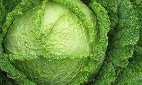 Сорт савойской капусты: выращивание и уход за растением