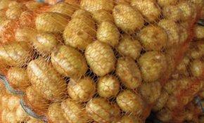 Описание картофеля гала