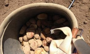 Какие удобрения лучше вносить при посадке картофеля