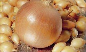 Как вырастить лук сорта геркулес