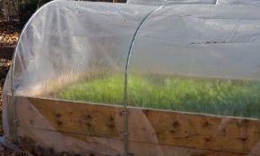 Рекомендации по посадке лука в теплице на зелень