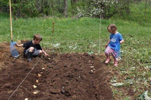 Методы посадки картошки