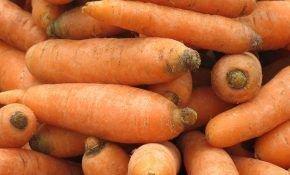 Корнеплоды в Подмосковье: подбор сортов моркови, правила выращивания культуры