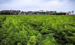 Когда и как правильно сеять морковь в Сибири?