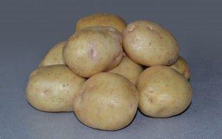 Невский картофель: описание сорта