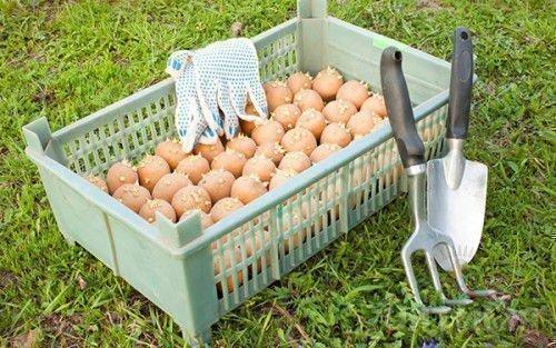 Обработка картошки