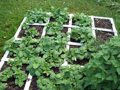 Огород с картофелем