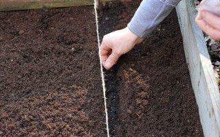 Как правильно осуществить посадку моркови под зиму