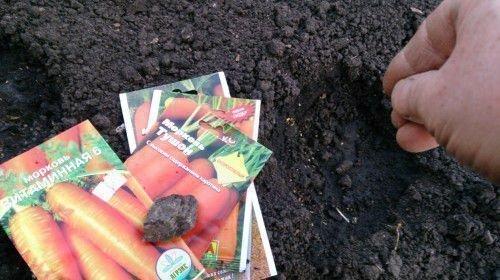 Посев моркови