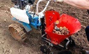 Посадка картофеля при помощи мотоблока