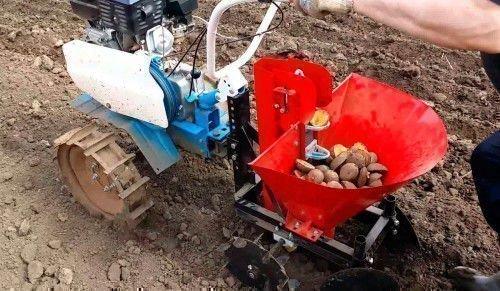 Процесс посадки картофеля молоблоком