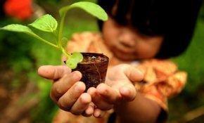 Рассада капусты для выращивания в Подмосковье