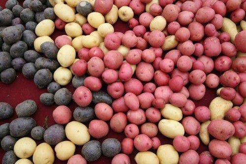 Разноцветная картошка
