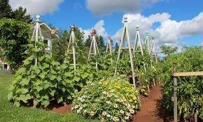 Выращивание огурцов: как сделать вертикальные грядки для посадки огурцов