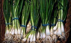 Как и где хранить зеленый лук