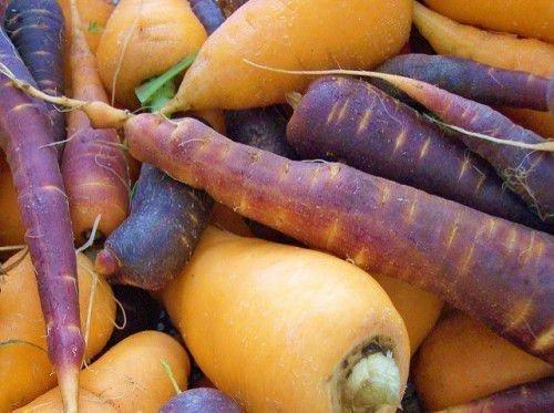 Желтая и фиолетовая морковь